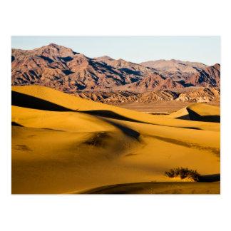 Patio del desierto tarjetas postales