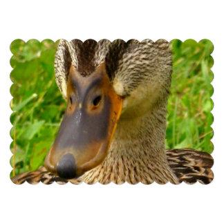 Pato abigarrado