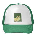 Pato amarillo gorra