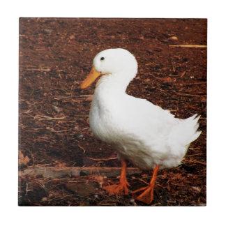 Pato Azulejo Cuadrado Pequeño