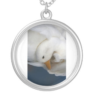 Pato blanco de Pekin con la cabeza remetida bajo i Collar Plateado