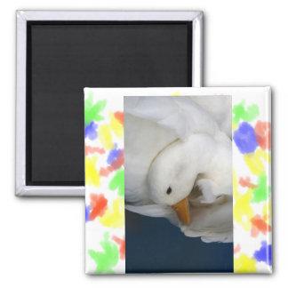 Pato blanco de Pekin con la cabeza remetida bajo i Imán Cuadrado