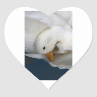 Pato blanco de Pekin con la cabeza remetida bajo i Colcomanias De Corazon
