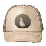 Pato blanco en el borde del lago gorro de camionero