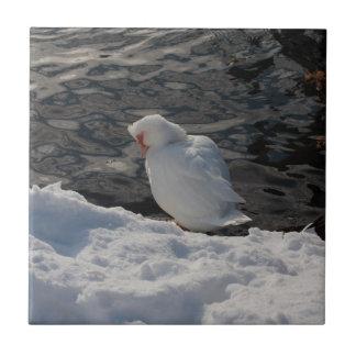pato blanco en la nieve azulejo cuadrado pequeño