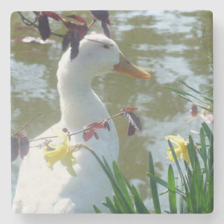 Pato blanco en práctico de costa amarillo de los posavasos de piedra