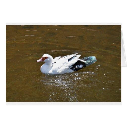Pato blanco felicitación