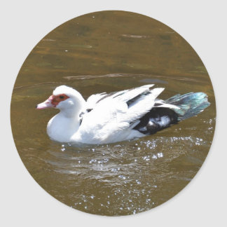 Pato blanco pegatina redonda