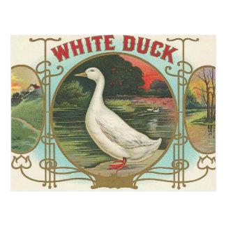 Pato blanco postal