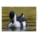 Pato blanco y negro tarjetón