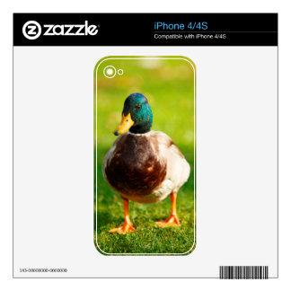 Pato Calcomanía Para iPhone 4S
