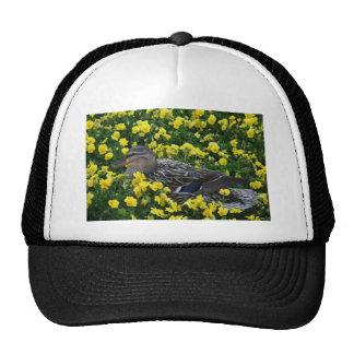 Pato con alas azul del trullo y flores amarillas gorra