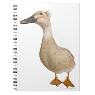 Pato con cresta femenino, 3 años libreta espiral