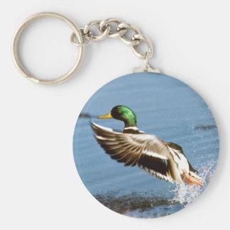 Pato de Drake del pato silvestre Llaveros Personalizados