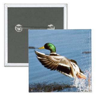 Pato de Drake del pato silvestre Pin Cuadrado