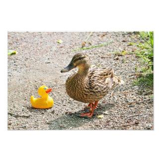 Pato de goma y pato de la madre impresiones fotográficas