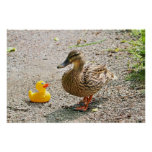 Pato de goma y pato de la madre impresiones