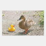 Pato de goma y pato de la madre rectangular pegatinas