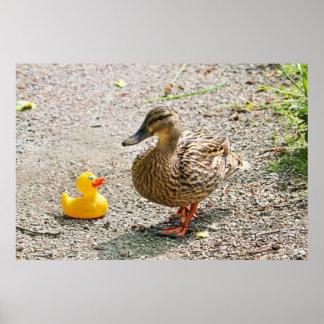 Pato de goma y pato de la madre póster