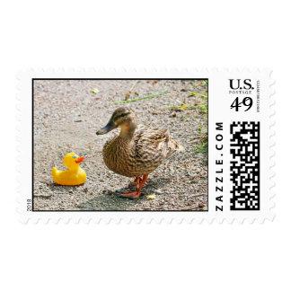 Pato de goma y pato de la madre franqueo