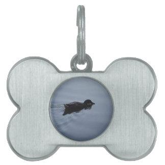 Pato de la natación en el lago, azul de la fauna placa de mascota