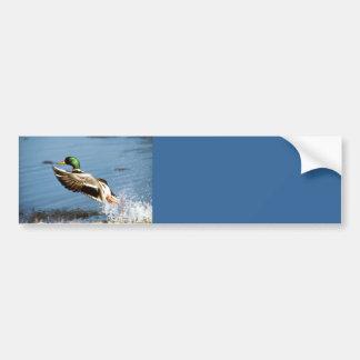 Pato de la pegatina para el parachoques del pato s pegatina de parachoque
