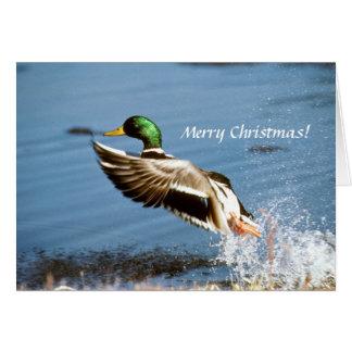 Pato de la tarjeta del pato silvestre
