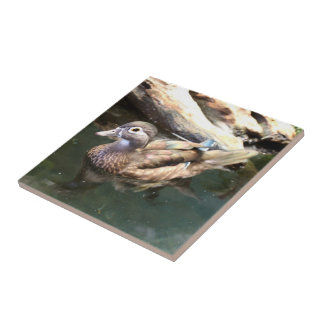 Pato de madera femenino azulejo cuadrado pequeño