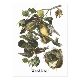 Pato de madera, Juan Audubon Postales