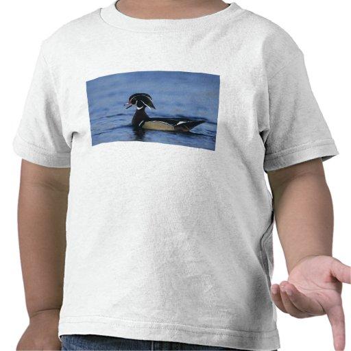 Pato de madera, sponsa del Aix, llamada masculina, Camisetas