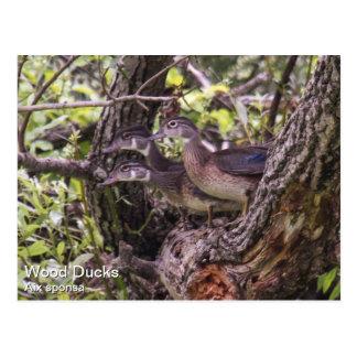 Pato de madera tarjetas postales