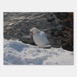 pato de Muscovy blanco en la nieve