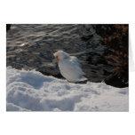 pato de Muscovy blanco en la nieve Tarjeta