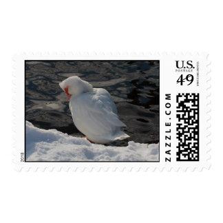 pato de Muscovy blanco en la nieve Timbres Postales