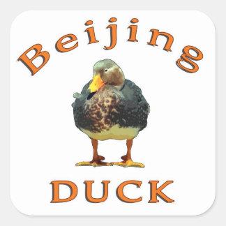 Pato de Pekín Calcomanías Cuadradases
