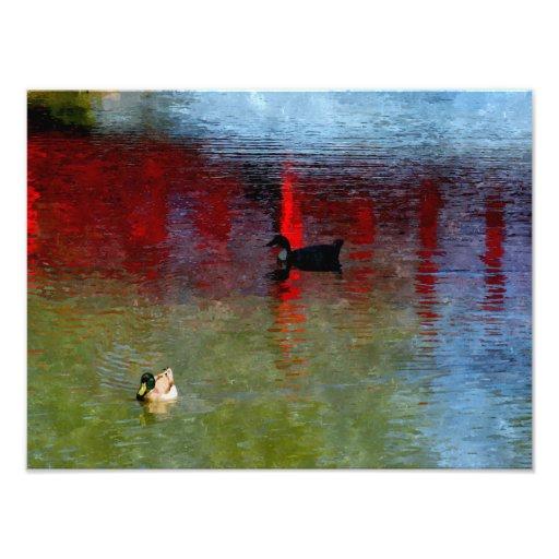 Pato de Pekín Fotografia