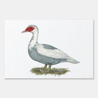 Pato de varios colores azul de Muscovy Señal