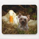 Pato de Yorkshire Terrier Mousepad Alfombrillas De Ratón