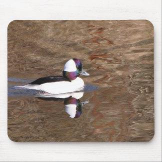 Pato del Bufflehead con la reflexión Tapetes De Ratón