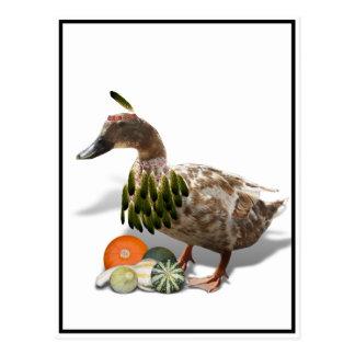 Pato del indio de la acción de gracias postal
