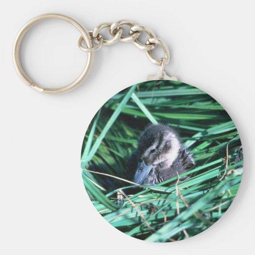Pato del pato rojizo llavero redondo tipo pin