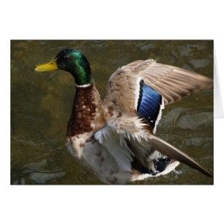 pato del pato silvestre alrededor para volar la tarjeta pequeña