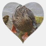 Pato del pato silvestre calcomania corazon