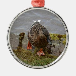 Pato del pato silvestre ornaments para arbol de navidad
