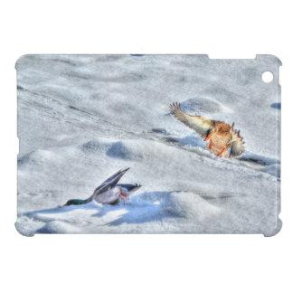 Pato del pato silvestre del aterrizaje y foto dive