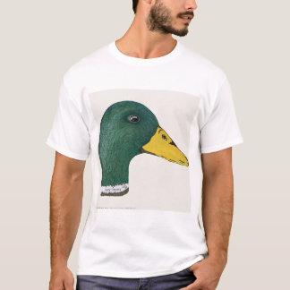 Pato del pato silvestre (Drake), acuarela Playera