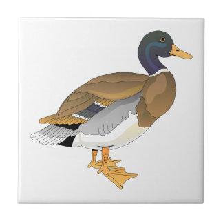 Pato del pato silvestre (Drake) Azulejo Cuadrado Pequeño
