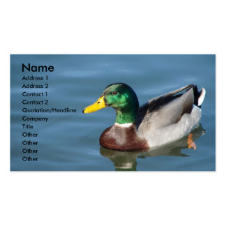 Pato del pato silvestre en agua azul plantillas de tarjetas de visita