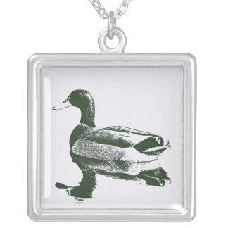 Pato del pato silvestre en collar blanco y negro
