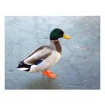 Pato del pato silvestre en el hielo comunicados personalizados